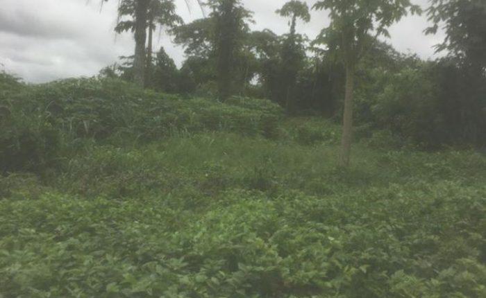 S'West Food Security: Senator Ogunbanjo, LEKRIS Farms offers Land, Training Centre to Yoruba Ko'ya for Food Production, Youth Training on Knowledge-based Entrepreneurship